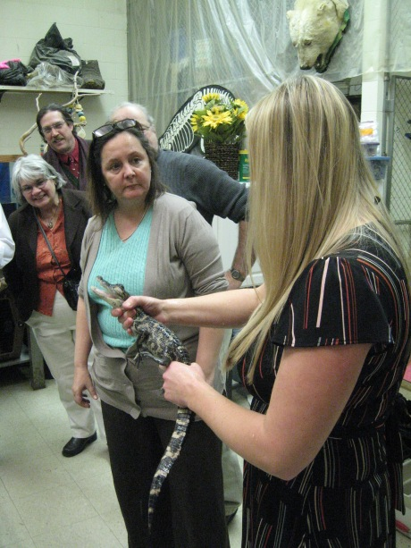 """Ms. Pavlicek shows the Science Center's American alligator """"Dennis"""" with visitors."""