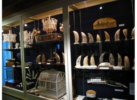 Scrimshaw Collection