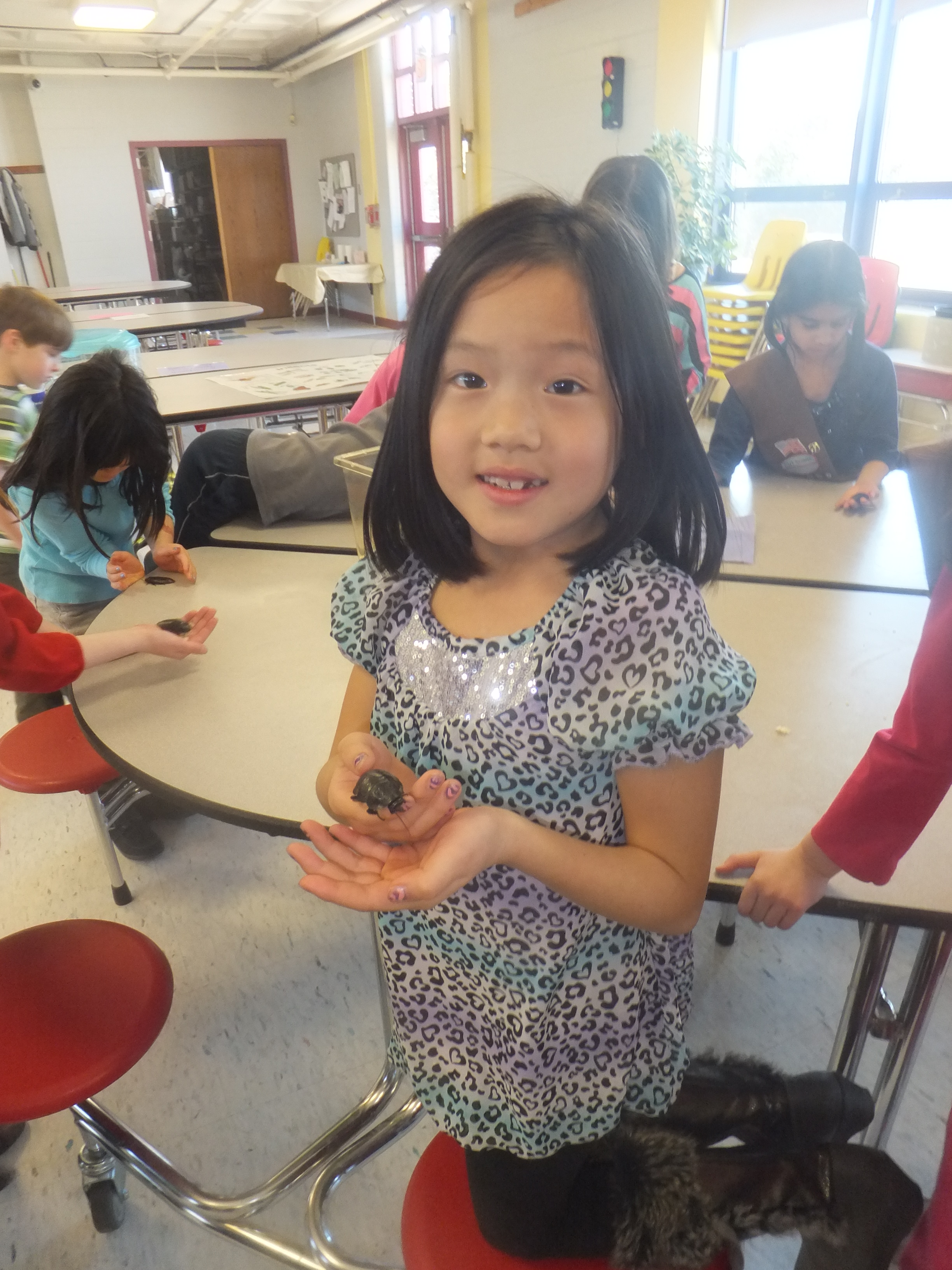 insects | The Burlington Science Center