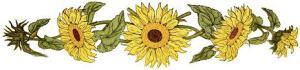 suunflower
