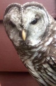 owl n me