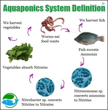 Aquaponics-System-Definition.jpg